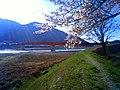 桜(新南部橋) - panoramio.jpg