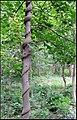 独特是树,你能找到在哪么(定位已经很准) - panoramio.jpg