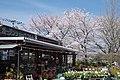 花の文化園 ガーデンショップフルル 2014.4.01 - panoramio.jpg
