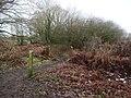 -2021-01-18 Side path off Weaver's Way footpath, East Ruston, Norfolk.jpg
