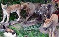 02015 Die Tiere von Waldkarpaten 0124.JPG