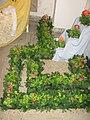 049 Zámek Veltrusy, červen 2012 20.JPG
