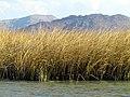 094 Reeds Lake Titicaca Peru 3236 (14995949458).jpg