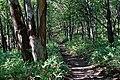 140829 Track Near Furepe Falls Shiretoko Hokkaido Japan04s3.jpg