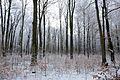 15-01-31-Franzosenbunker-Eberswalde-RalfR-DSCF2039-17.jpg