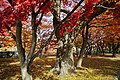 171103 Morioka Castle Morioka Iwate pref Japan03n.jpg