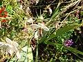 2008 07 Botanical Garden Meran 70663R0234.jpg