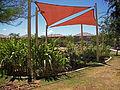 2008 community garden PhoenixAZ 4750955867.jpg