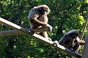 20101017 Zoo de Lille (4)