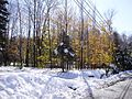 2011-10-30 01-Trees along Pleasant Valley Road in Hopewell Township, Mercer County, New Jersey after 6 to 7 inches of snow fell the previous day during the 2011 Halloween nor'easter.jpg
