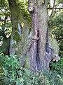 2012-08-29 ND115 Naturdenkmal Streitlinde bei Königsfeld.jpg