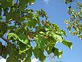 20120816Hockenheim06.jpg