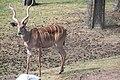 2014-08-15 Safari Serengeti-Park Hodenhagen 04.jpg