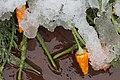 2015-365-136 Iced Poppies (17725258146).jpg