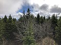 2019-10-27 11 57 06 View east-southeast across a Red Spruce forest from the observation tower on Spruce Knob in Pendleton County, West Virginia.jpg