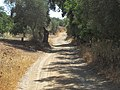 27-06-2017 Section of Footpath GR13, Alcaria, Albufeira.JPG