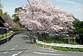 3 Chome Esakachō, Suita-shi, Ōsaka-fu 564-0063, Japan - panoramio.jpg