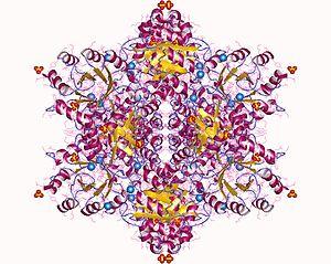 Phosphopentose epimerase - D-ribulose-5-phosphate 3-epimerase dodekamer, Francisella tularensis