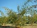 43Lubao Bamboo Hub & Eco-Park Santa Catalina Pampanga 06.jpg
