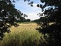 49847 Itterbeck, Germany - panoramio (5).jpg