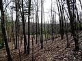 5 acre looking Southwest from corner (4469913723).jpg