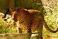 7. Arignar Anna Zoological Park.jpg