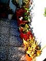 A@a part of Andr. garden - panoramio (14).jpg