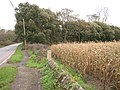 A Field of Maize by the Roadside - geograph.org.uk - 75005.jpg