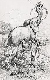 Drawing of humans hunting an elephant-like mammoth, which is lifting a human with its trunk