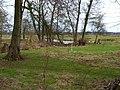 A corner of Scruton Park - geograph.org.uk - 139147.jpg