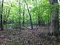 A deer - panoramio.jpg