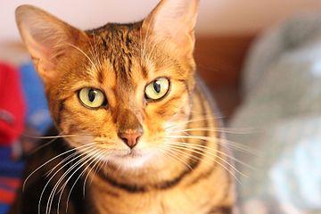 A furry feline friend.jpg