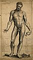 A male nude, seen from the front, holding an apple. Engravin Wellcome V0007796.jpg