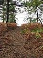A steep ascent - geograph.org.uk - 1018520.jpg