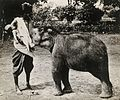 A woman and a child, the woman is suckling a baby elephant Wellcome V0029569.jpg