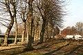 Abdij van Herkenrode, geleide lindedreef - 375131 - onroerenderfgoed.jpg