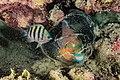 Abrolhos Marine National ParkRobertoCostaPinto20.jpg