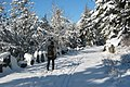 Acadia National Park, cross-country skier on a carriage road.jpg