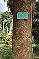 Acharya Jagadish Chandra Bose Indian Botanic Garden - Howrah 2011-01-08 9844.JPG