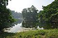 Acharya Jagadish Chandra Bose Indian Botanic Garden - Howrah 2011-01-08 9857.JPG