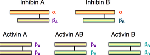Activin and inhibin - Schematic diagram of the 1D structures of inhibin and activin. The black line between the monomers represents a disulfide bond.