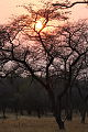 African sunrise (9868844613).jpg