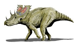Agujaceratops mariscalensis