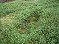 Akamella hautakuoppa.jpg