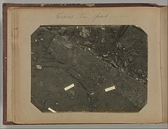 Album of Paris Crime Scenes - Attributed to Alphonse Bertillon. DP263666.jpg
