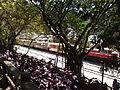 Alishan railway 2014 04.JPG