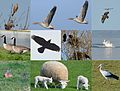All kinds of birds and animals in springtime when biking at the IJsseldike - panoramio.jpg