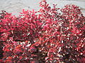 Amin al-Islami Park - Trees and Flowers - Nishapur 019.JPG