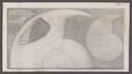 Ammonites spec. - - Print - Iconographia Zoologica - Special Collections University of Amsterdam - UBAINV0274 091 01 0028.tif