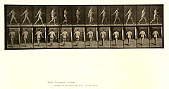 Animal locomotion. Plate 389 (Boston Public Library).jpg